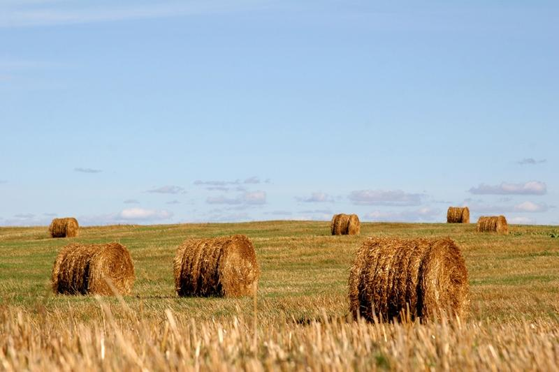 lauksaimnieciba