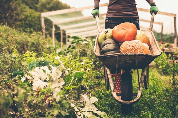 05-things-know-organic-food-farming